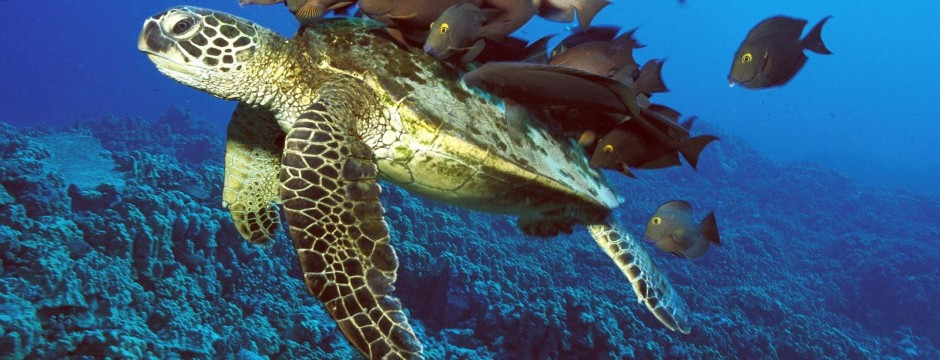 Tartaruga-marina-02